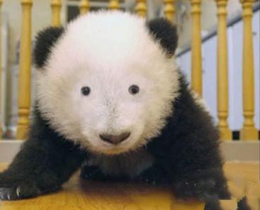 naked panda